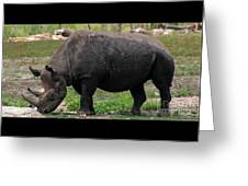 Black Rhino-19 Greeting Card