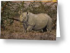 Black Rhino Tanzania Greeting Card