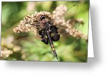 Black Saddlebags Dragonfly At Rest Greeting Card