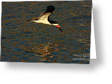 Black Skimmer Reflections Greeting Card