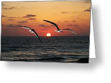 Black Skimmers At Sunset Greeting Card