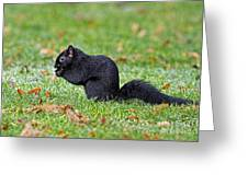 Black Squirrel Greeting Card
