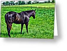 Black Stallion In Pasture Greeting Card