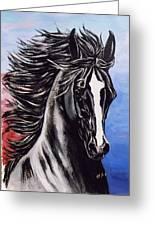 Black Stallion Greeting Card