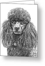 Black Standard Poodle Sketched In Charcoal Greeting Card
