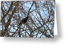 Black  Starling Greeting Card