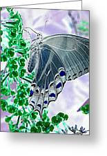 Black Swallowtail Abstract  Greeting Card by Kim Galluzzo Wozniak