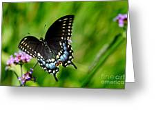 Black Swallowtail Butterfly In Garden Greeting Card