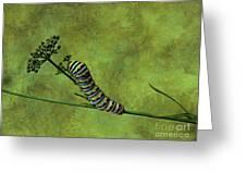 Black Swallowtail Caterpillar Greeting Card