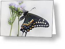 Black Swallowtail II Greeting Card