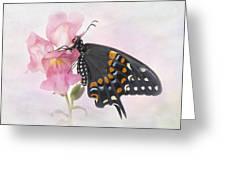 Black Swallowtail Iv Greeting Card