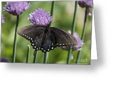 Black Swallowtail On Chives Greeting Card