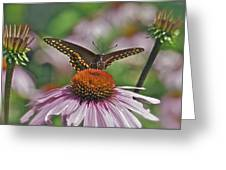 Black Swallowtail On Cone Flower Greeting Card