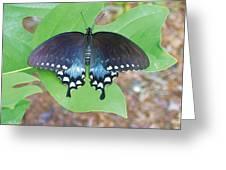 Black Swallowtail On Tulip Poplar Greeting Card