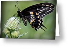 Black Swallowtail Vignette Greeting Card