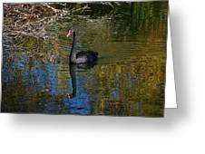 Black Swan 4 Greeting Card