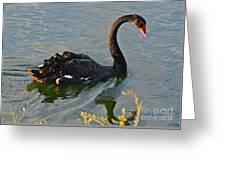 Black Swan At Sunset Greeting Card