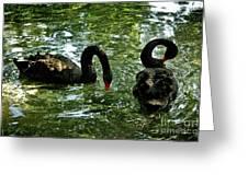 Black Swan Ballet Greeting Card