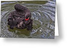 Black Swan Gladys Porter Zoo Texas Greeting Card