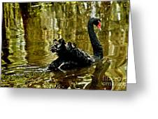 Black Swan Lake Greeting Card