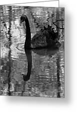 Black Swan Series Iv - Black And White Greeting Card