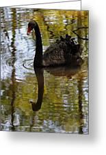 Black Swan Series Iv Greeting Card