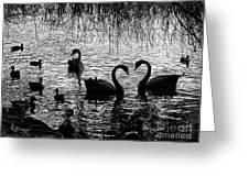 Black Swan Silhouette Greeting Card