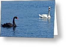 Black Swan White Swan Greeting Card