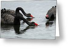 Black Swans Australia Greeting Card