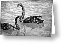 Black Swans - Black And White Textures Greeting Card