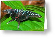 Black Swordtail Butterfly Greeting Card