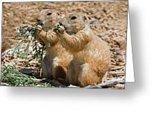 Black Tail Prairie Dogs Greeting Card