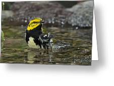 Black-throated Green Warbler Greeting Card