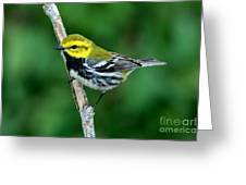 Black-throated Green Warbler, Male Greeting Card