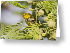 Black-throated Gren Warbler Greeting Card