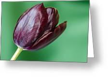 Black Tuip Greeting Card