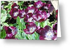 Black Tulips Greeting Card