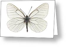 Black-veined White Butterfly Greeting Card