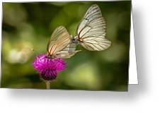 Black-veined White Greeting Card