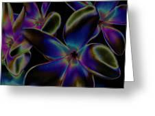 Black Velvet Frangi Greeting Card by Rebecca Flaig