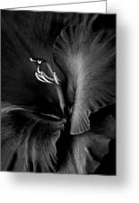 Black Velvet Gladiolia Flower Greeting Card by Jennie Marie Schell