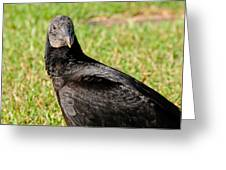 Black Vulture Greeting Card