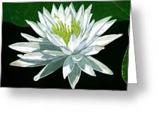 Black Water Beauty Greeting Card