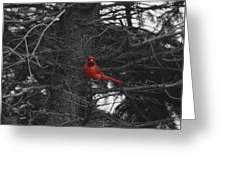 Black White And Red Greeting Card