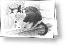 Black White Cat Pencil Portrait Greeting Card