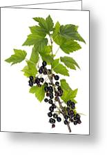 Black Wild Forest Berries Greeting Card