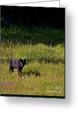 Black Wolf   7251 Greeting Card