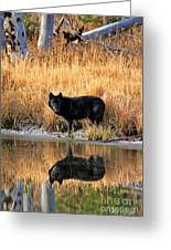 Black Wolf Reflection Greeting Card