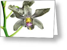 Black Yellow And Purple Orchid Greeting Card