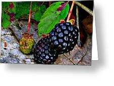 Blackberries Greeting Card by Debbie Sikes